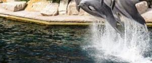 Německý Legoland® A Norimberská Zoo S Delfináriem