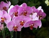 Drážďany | Mezinárodní Výstava Svět Orchidejí
