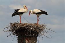Dyje A Morava | Od Rybářských Sítí Po Ptačí Křídla
