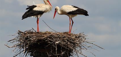 Dyje A Morava   Od Rybářských Sítí Po Ptačí Křídla