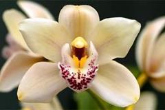Výstava Orchidejí V Hirschstetten