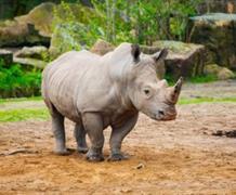 Zoo A Safari Park Dvůr Králové Nad Labem