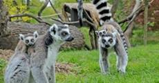 Zoo Lešná A Lázně Luhačovice
