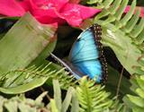 Do Vídně K Moři A Za Motýlími Křídly