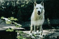 Dolním Rakouskem Na Šlapací Drezíně Nebo Do Vlčí Zoo