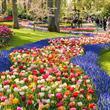 Zaanse Schans, Amsterdam a největší kvetoucí park v Evropě Keukenhof s ubytováním ***