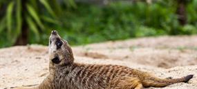 Safari Park Dvůr Králové, hospitál Kuks a zámek Častolovice