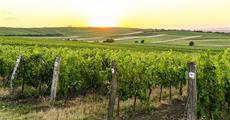Vinobraní ve Velkých Pavlovicích s cyklistikou