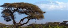 Výstup na Kilimanjaro – trasa Marangu