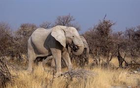 Botswana – Safari v Deltě Okavango