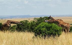 Růžové jezero Nakuru a Masai Mara