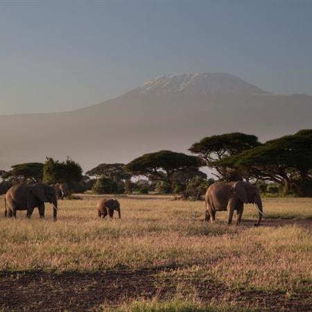 Safari v NP Amboseli a Tsavo West