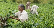 Země úsměvů - Srí Lanka