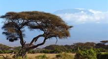 Amboseli, Lake Nakuru a Masai Mara (luxusní kempy)