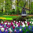 Tulipánový Keukenhof, Amsterdam i ochutnávka holandských sýrů