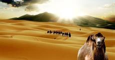 OKRUH SAHAROU NA VELBLOUDECH