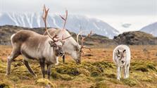 Špicberky - pozvání do Arktidy