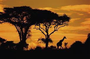 Safari okruh Keňou s pobytem u Indického oceánu