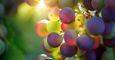 Relax s vinobraním na Ischii - letadlem
