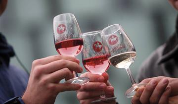 Svatomartinská husa, vína a cimbál v Hustopečích s návštěvou Brna