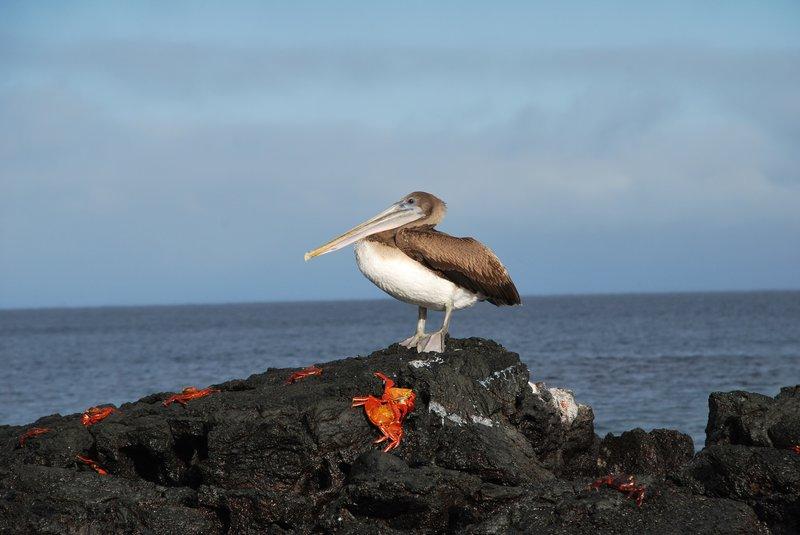 Největší ptáci na světě tumblr