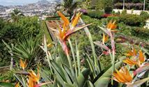 Madeira - pohodová turistika na květinovém ostrově věčného jara