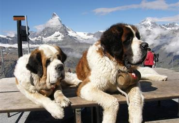 Švýcarsko, Francie - Krásy Švýcarska a alpských velikánů