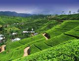 Krásy jižní Srí Lanky s nakouknutím do území hor - hotel
