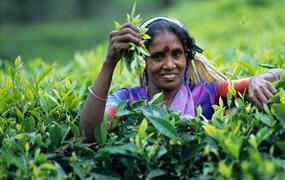 Krásy jižní Srí Lanky s nakouknutím do území hor za super cenu - penzion