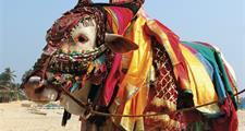 Indická Goa - kráska Orientu