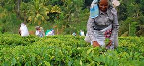 Tajuplná Srí Lanka s koupáním na východním pobřeží za super cenu - hotel/penzion