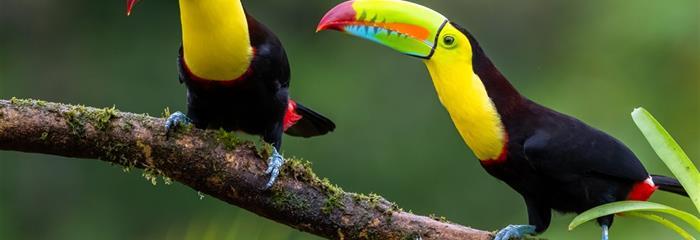 Pohoda na Kostarice - exotický ráj na břehu Karibiku s výlety