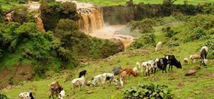 Etiopie - Země biblické královny ze Sáby - Velký křesťanský okruh