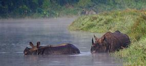 Nepál - V srdci Himaláje s lehkou turistikou, památkami a safari v NP Chitwan