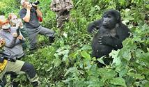 Uganda - Dobrodružná výprava nejen k horským gorilám - s permity a českým průvodcem v ceně