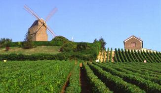 Vinobraní v Alsasku a Burgundsku