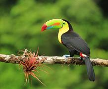 Panama - Nikaragua - Kostarika