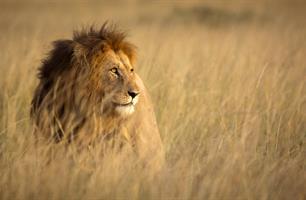 Masai Mara a pobyt u moře