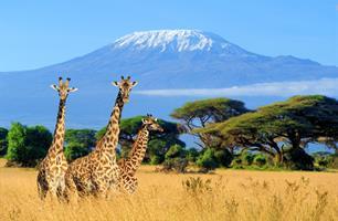 Národní parky Keni a nejkrásnější pláž Afriky