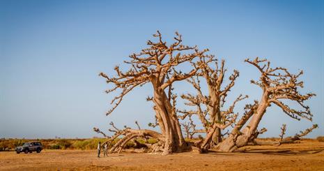 Velký okruh Senegalem se safari