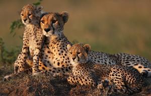 Za Velkou pětkou do Masai Mary