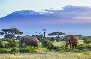 Ve stínu Kilimandžára