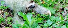 PANAMA – za stále zelenou přírodou – 10 DNÍ / 9 NOCÍ
