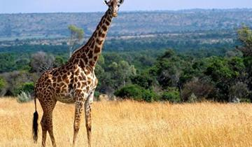 Po stopách žiraf