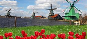 Holandsko s návštěvou květinového korza