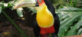 Magická Kostarika